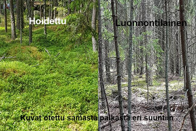 Suomi harjoittaa jatkuvaa kasvatustakaikkialla
